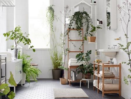 , Зеленый уголок в квартире